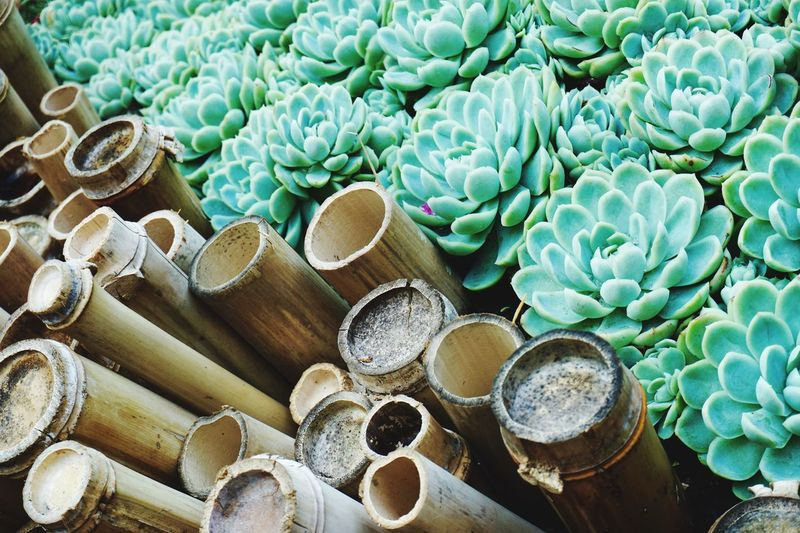 High angle view of succulent plants by bamboos