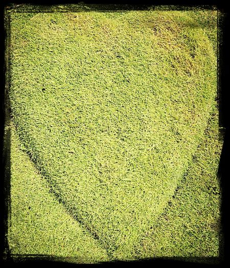 Textures And Surfaces green,green,grass home.....