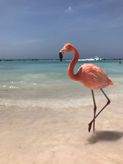 Flamingo Flamingo Water Bird Nature Sea One Animal Beauty In Nature