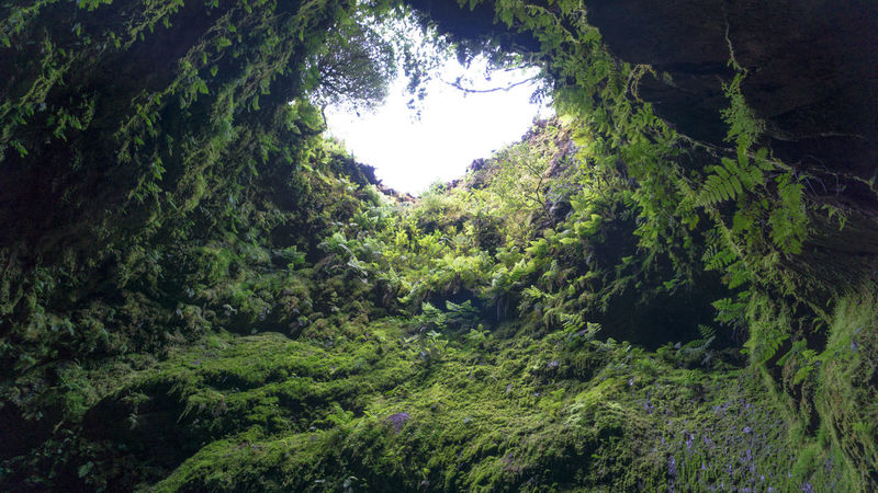 Algar do Carvão. Volcano Cave located on Terceira island, Azores, Portugal. Algar Do Carvão, Terceira, Azores Azores Portugal Terceira Island Beauty In Nature Cave Day Forest Green Color Growth Landscape Lush Foliage Mountain Nature No People Outdoors Scenics Tranquil Scene Tranquility Tree Volcano