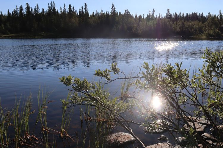 Water Plant Tree Lake Tranquility Tranquil Scene Reflection Beauty In Nature Nature Scenics - Nature Day Sunlight No People Growth Sky Forest Non-urban Scene Outdoors Sun Lens Flare Langsua National Park Norway