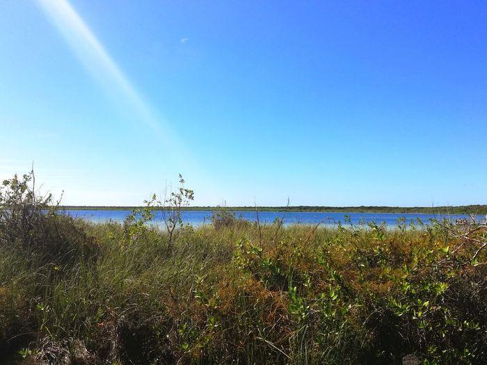 Water Clear Sky Sea Beach Bird Blue Marram Grass Sky Horizon Over Water Grass