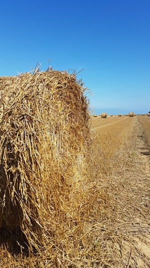 Norrey En Auge Normandie, France Grasses Mountain Herbs Summer Sun Serenety Wide View Staw Haystack Yellow Rolls Gold Summer Sun endlessness Harvest Clear Sky Agriculture Rural Scene Sky Farmland Hay Bale Cultivated Land Field Hay Harvesting Farm Agricultural Field