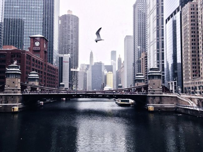 Winter Chicago Chicago River AMPt_community EyeEm Best Shots Architecture Great Views Wintertime
