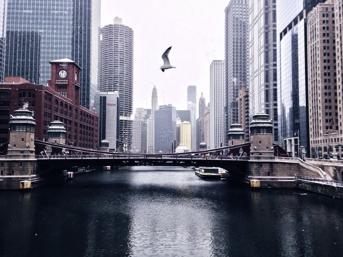 Seagull flying over water canal in modern city