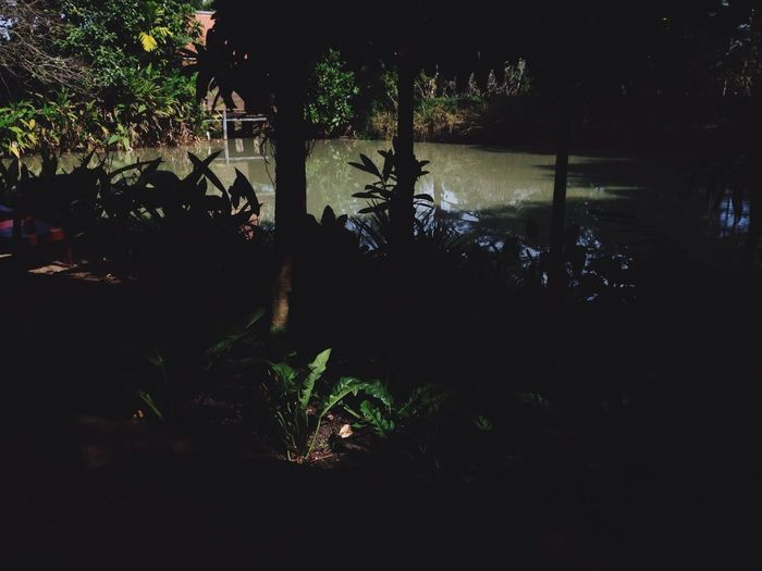 Spot the light Garden Spot Light Cafe In Garden Afternoon Daylight Nakornchaisri Relaxing Trees Swamp Nakornphathom Thailand By The Garden Spotted In Thailand The Great Outdoors - 2016 EyeEm Awards