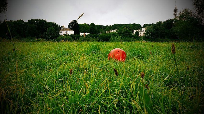 Does it float? Nature Something Strange Walking Around Forgotten Toys