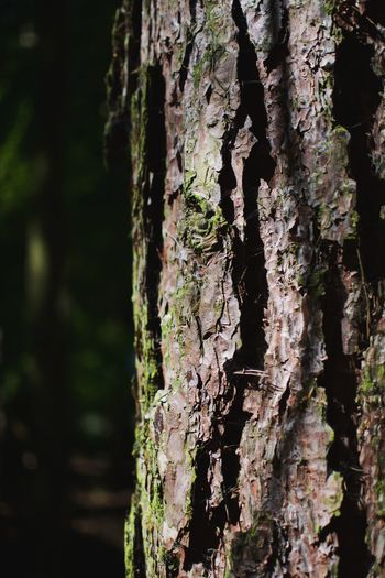 Tree Trunk Plant Tree Trunk Nature Day Close-up Wood - Material Outdoors Sunlight Focus On Foreground Pattern Rough Plant Bark Bark Branch Growth No People Textured  Forest