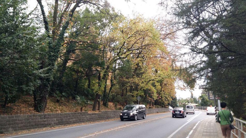 прогулка. Сочи деревья осень листья листва прогулка зеленый Дорога Autumn Car Tree Transportation Road Land Vehicle Day Growth Nature