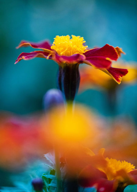 Plant Beauty In Nature Close-up Flower Growth Freshness Nature No People Flowering Plant Fragility Vulnerability  Selective Focus Petal Inflorescence Flower Head Outdoors Pollen Macro Djurgården Yellow Orange Color Focus On Foreground Iris - Plant A New Beginning
