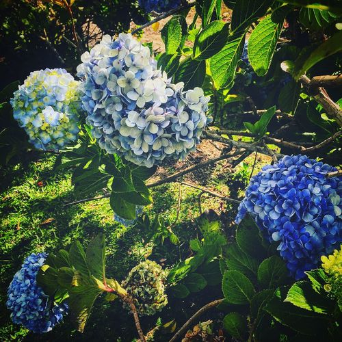 Check This Out Hanging Out Relaxing Taking Photos Enjoying Life Nature Flowers Instagramer