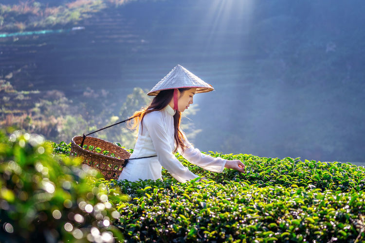 Asian woman wearing Vietnam culture traditional in green tea field. Women One Person Real People Hat Plant Adult Clothing Lifestyles Day Nature Selective Focus Basket Growth Asian Style Conical Hat Leisure Activity Holding Three Quarter Length Beauty In Nature Casual Clothing Outdoors Hairstyle Farmer