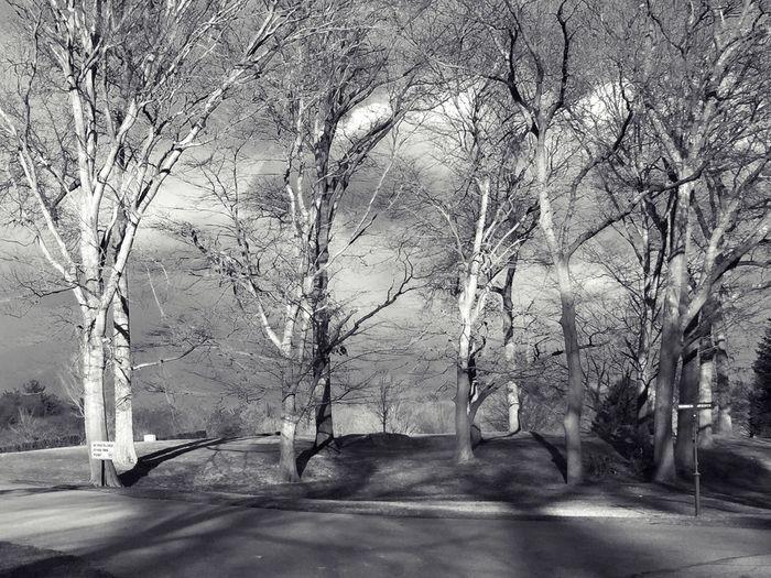 Trees Shadows Blackandwhitecross