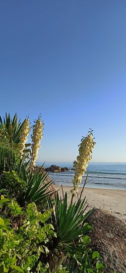 Plants growing on beach against clear sky