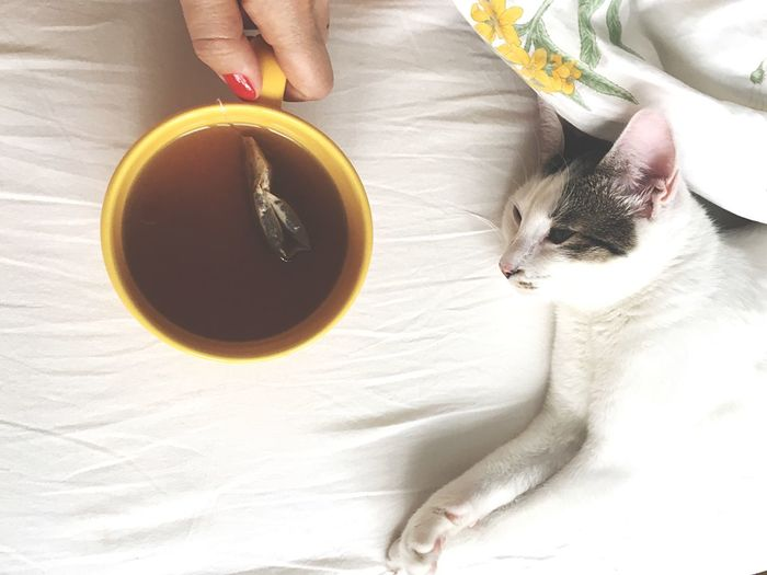 Teatime Tea - Hot Drink Tired Friends Lifestyles Weekend Relax Weekend Food And Drink Human Body Part One Person Drink Hand Human Hand Refreshment Cup One Animal Animal Bed Coffee High Angle View