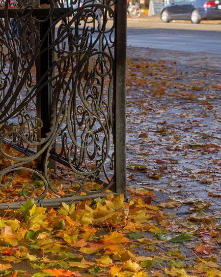 Ballard fall Day Land Vehicle Outdoors Close-up Nature