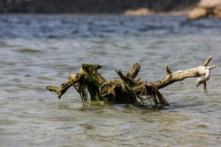 Close-up of driftwood in sea