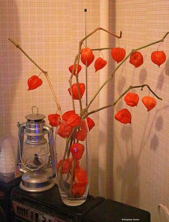 натюрморт физалис кухня Naturmort Red