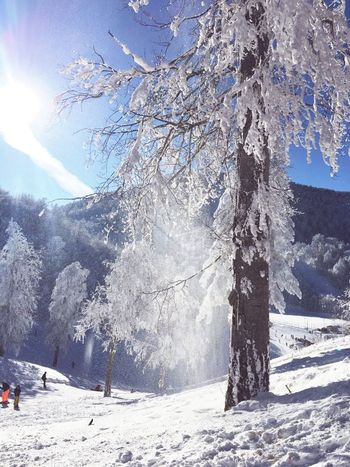 Snow Winter Cold Temperature Nature Sunlight Day Outdoors