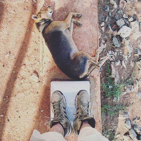 zzzZZ. Dog Trincomalee SriLanka Zzz zzzz zzzzz