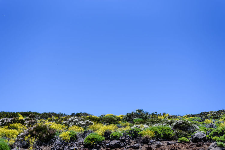 Low angle view of plants on a hillslope under a blue sky (shot on Tenerife island, Spain) Plant Travel Traveling Beauty In Nature Blue Clear Sky Copy Space Environment First Eyeem Photo Green Color Growth Land Landscape Minimalism Nature negative space Outdoors Plant Scenics - Nature Sky Sunlight Tranquility