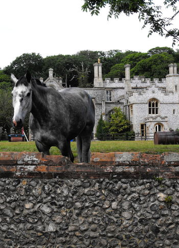 Grey horse and grey mansion Mammal Architecture Animal Animal Themes Domestic Animals Domestic Plant Built Structure Tree Pets Livestock Sky Day One Animal Nature Vertebrate No People Building Exterior History Standing Outdoors Stone Wall Herbivorous Horse Equine