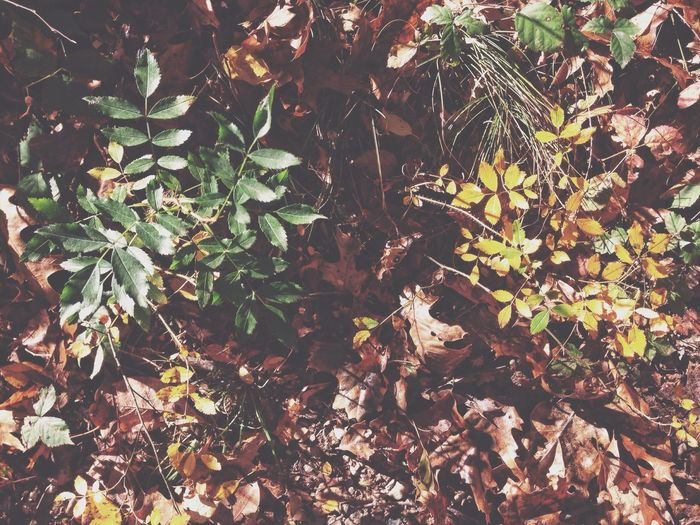 Into the Woods 1/3 Nature EyeEm Nature Lover Landscape Taking Photos Fall Beauty Autumn Open Edit
