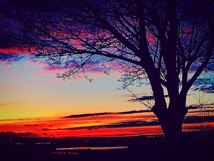 Sunset Beauty In Nature Tree Nature Tranquil Scene Scenics Silhouette Sky Outdoors Landscape EyeEmNewHere Beauty In Nature Parkgate