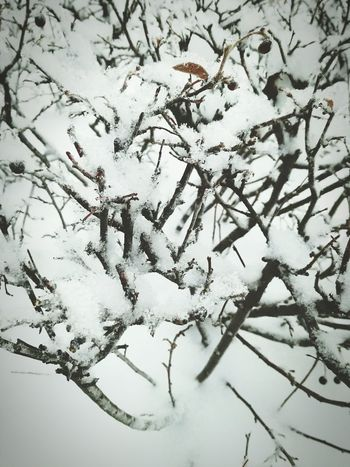 -26 Nature Tree Snow Beauty In Nature Day No People Winter Cold Temperature Nature Beauty Tyumen Tyumen'