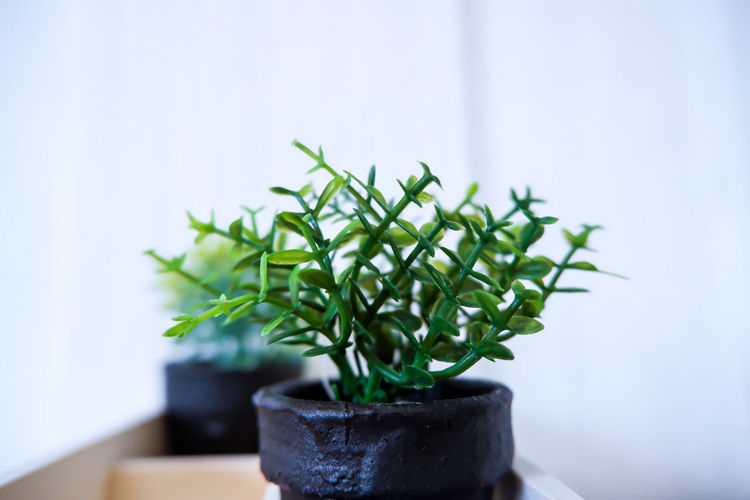 Close-up of small potted plant