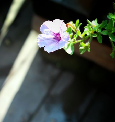 Flower Collection Nature_collection EyeEm Nature Lover Flowers 花と庭