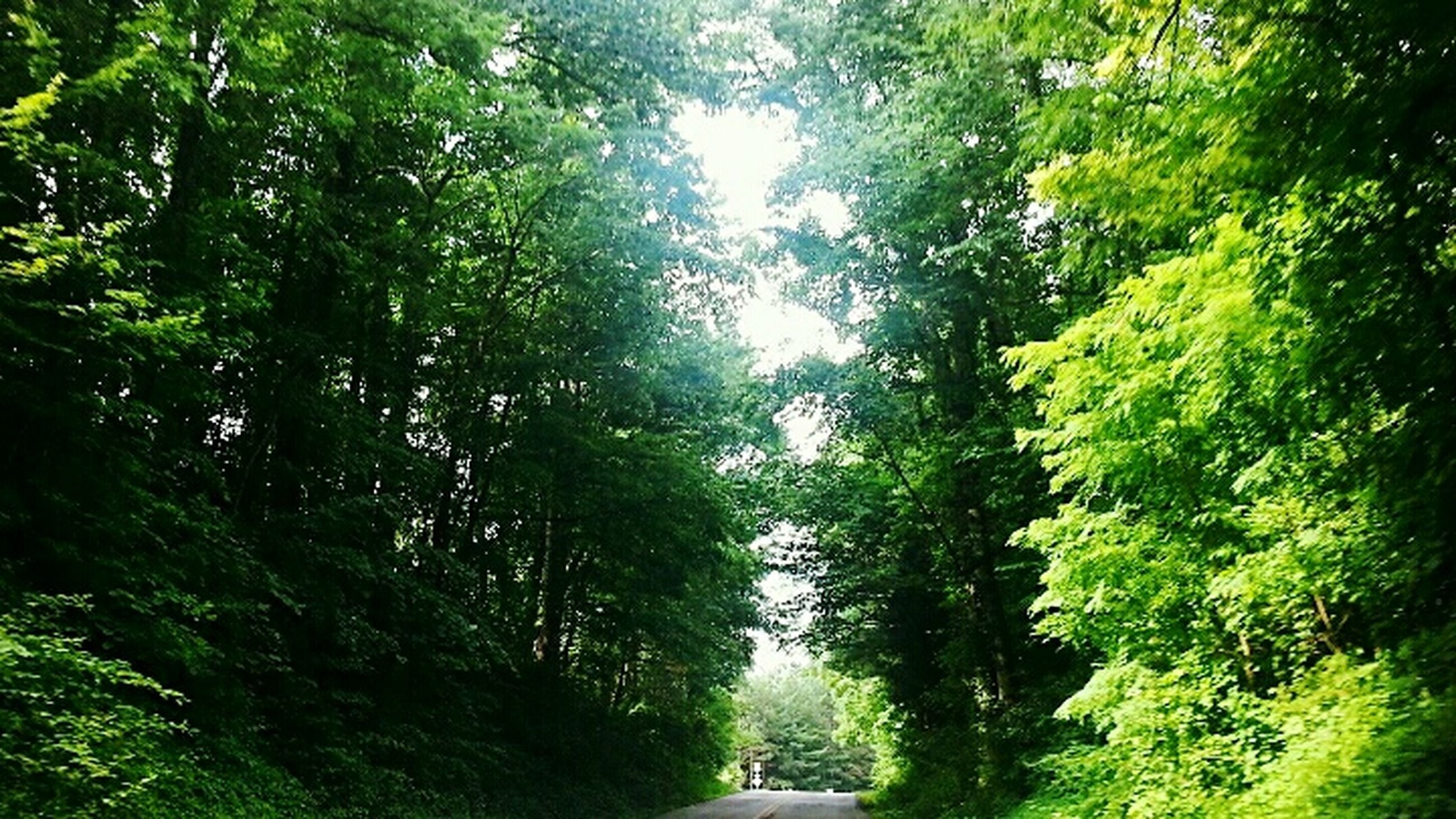 tree, green color, growth, the way forward, tranquility, nature, lush foliage, forest, tranquil scene, beauty in nature, branch, scenics, footpath, diminishing perspective, sunlight, day, transportation, outdoors, green, plant