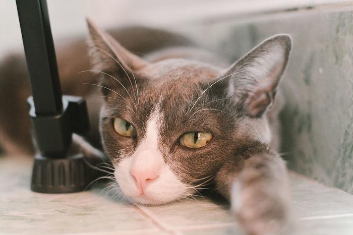 Cats 🐱 Animal Cat Cats Cat♡