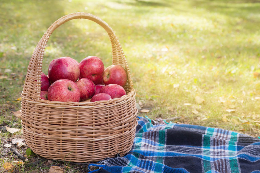 red apples in a basket in nature with free space for text Apple Autumn Copy Space Apple - Fruit Apples Basket Container Fall Field Food Food And Drink Freshness Fruit Grass Harvest Healthy Eating Landscape Nature No People Nobody Picnic Picnic Basket Red Red Apple Ripe Juicy Autumn Collection Homegrown Produce Farmland Countryside