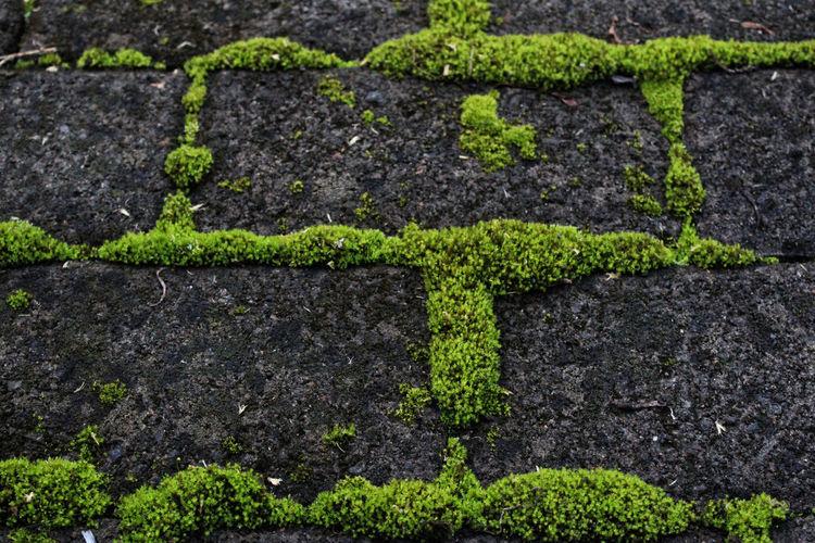 Full frame shot of mossy footpath