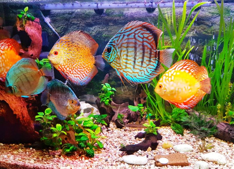 Aquarium Aquarium Life Aquarium Photography Plant Growth Nature Beauty In Nature Bubbles Colors Butiful Discus Discus Fish Animal Themes Vegetable Nature Beautiful ♥ Wallpaper Of The Day Relaxation Nature Photography Water Reflections Outdoors No People Day Prickly Pear Cactus Healthy Eating