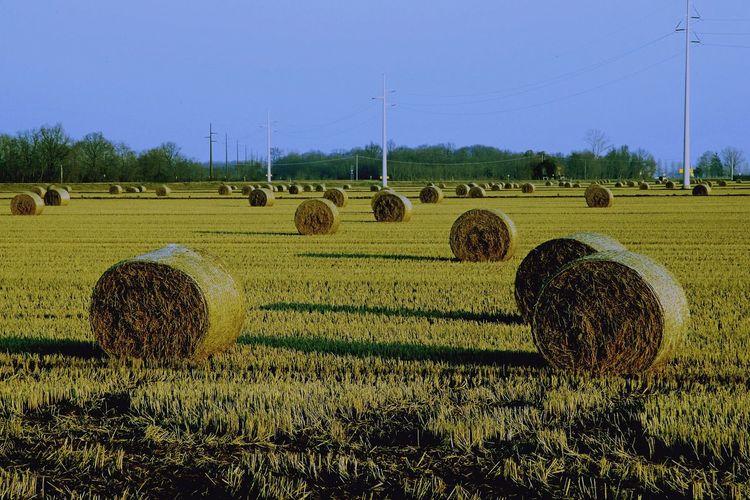 Hay Bale Rural