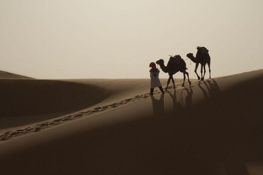 Desert Deserts Around The World Desert Beauty Desert Life Camel Camels Camels Travel Riding Man Silouette Silouette And Shadows Silouhette Silouette Photography Animals Merzouga Merzouga Sahara Desert Trippin Morocco MoroccoTrip Moroccan Sahara Sahara Desert Dune Dunes Sand Sand Dune Miles Away