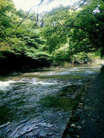 養老渓谷 Tree Water Forest Beauty In Nature Day Beauty In Nature Green Color Riverside お出掛け River Enjoying Life Japanese  Trip Photo Tree Yōrō Keikoku Relaxing Green Color