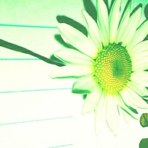 Primavera Flower Spring First Eyeem Photo