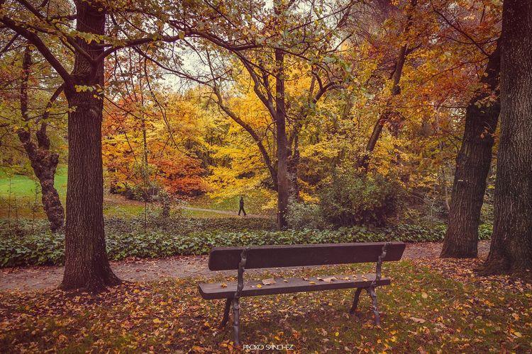 Madrid Otoño Autumn Taking Photos