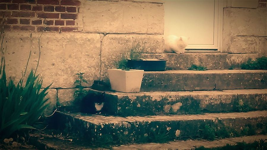 Les Soces on youtube Black&white Cats Walking Around Notes From The Underground