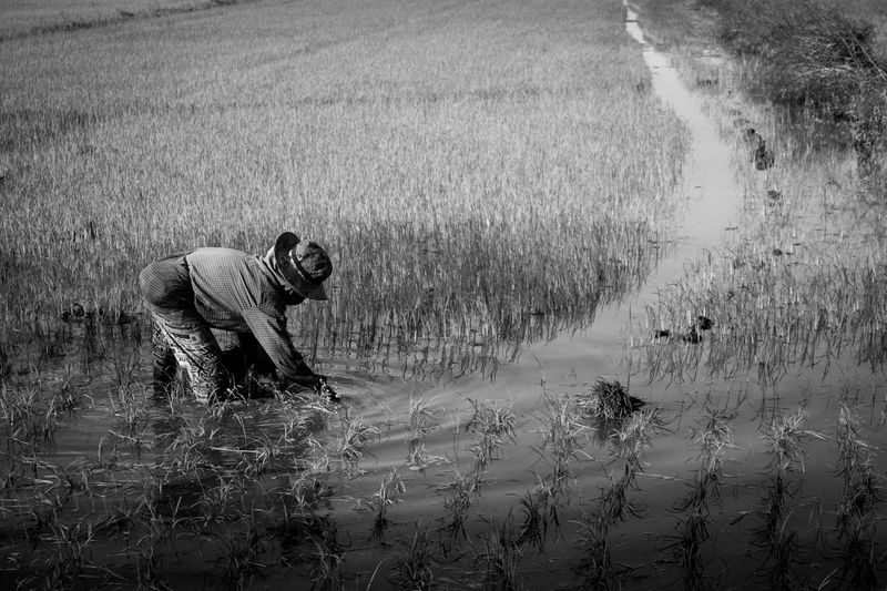 Farmer Agriculture Agriculture Photography Agricultural Land Black And White Farmer In Thailand ใน Thailand