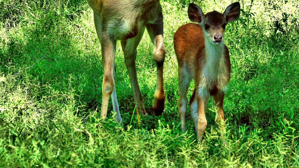 Tamannasionalbaluran Baby Animals Cute Feel The Journey