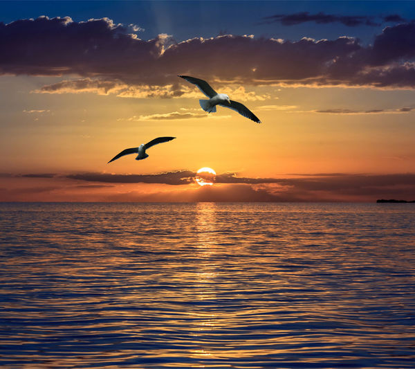 Sunset Flying Animal Wildlife Animals In The Wild Bird Reflection Silhouette Nature Outdoors Mid-air Sky Landscape Beauty In Nature Sea Dusk Animal Themes Scenics No People Cloud - Sky Water