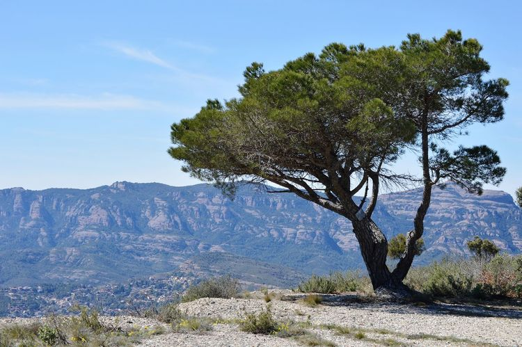 la zona de relax / the relax zone Tree Tree Area Mountain Water Clear Sky Branch Blue Forest Tree Trunk Pinaceae Treetop Fruit Tree Long Shadow - Shadow Focus On Shadow Plant Part Mountain Peak Evergreen Tree Pine Woodland Deciduous Tree EyeEmNewHere