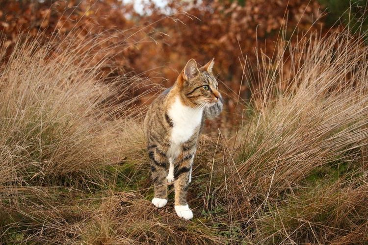 Domestic Cat Pets One Animal Domestic Animals Animal Themes Feline No People Grass Outdoors Mammal Day Looking At Camera Sitting Portrait Nature Cat♡ Autumn🍁🍁🍁 Cute Animals In The Wild Animal Wildlife Plant Beautiful Nature Amazing Landscape Beauty In Nature