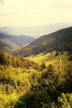 the black forest. Mountains