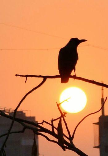 Sunset D5200 Nikon First Eyeem Photo