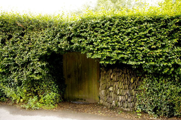 The hidden door Beech Hedge Dark Door Green Color Hidden Door Wall